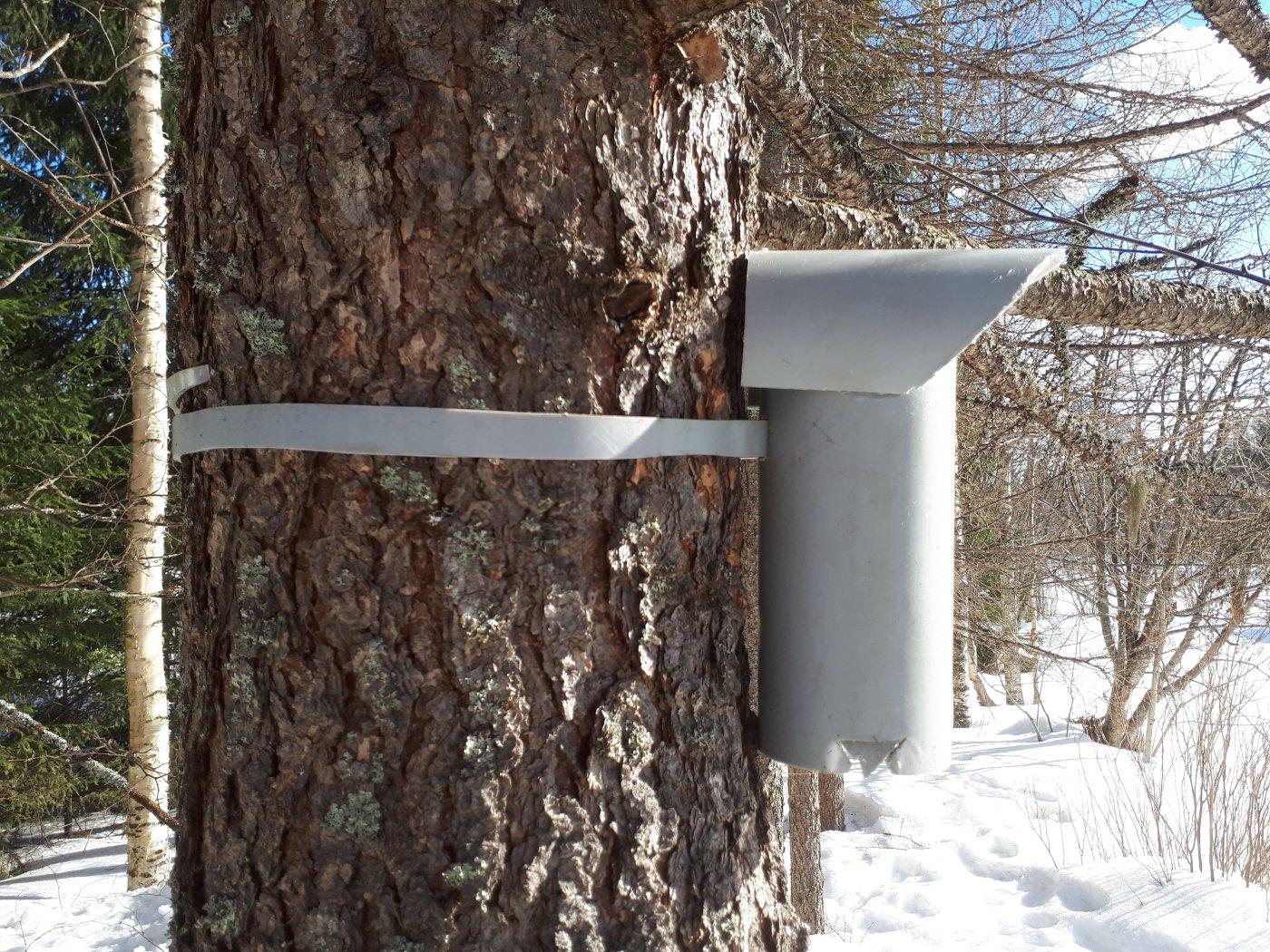Linnunpöntön Kiinnitys Puuhun